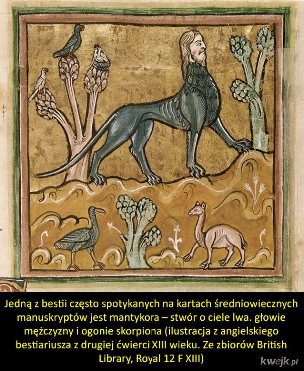 Dziwne stwory ze średniowiecznych manuskryptów