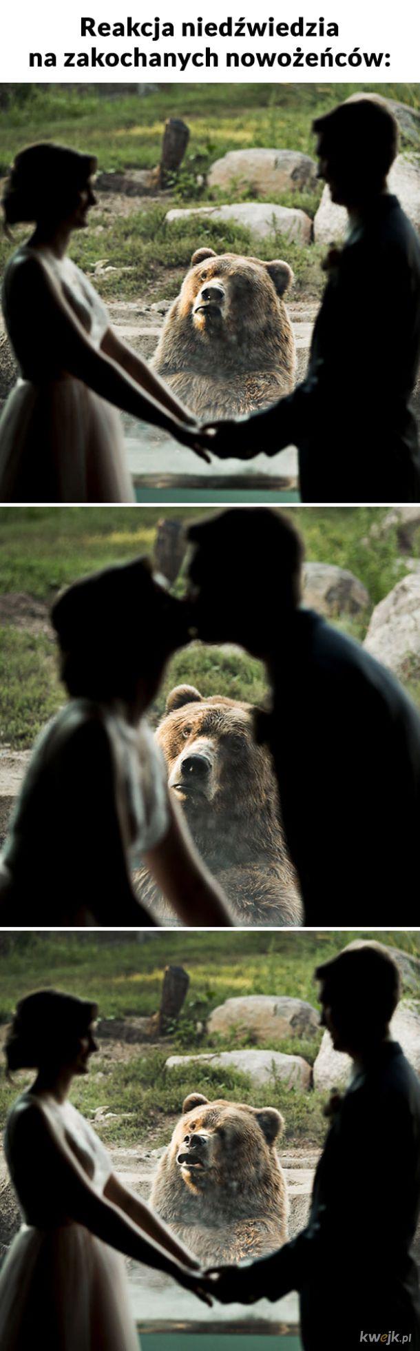 Ten niedźwiedź to ja