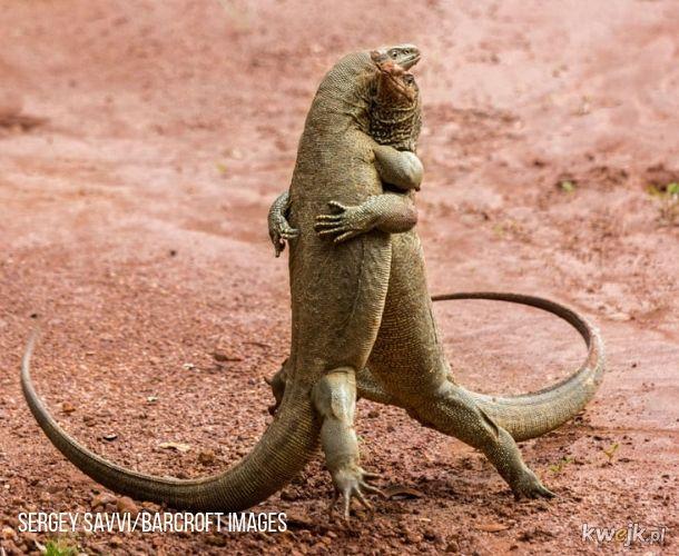 Laureaci Comedy Wildlife Photography