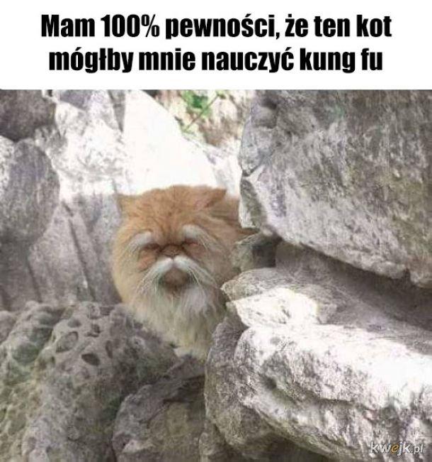 Koci mędrzec