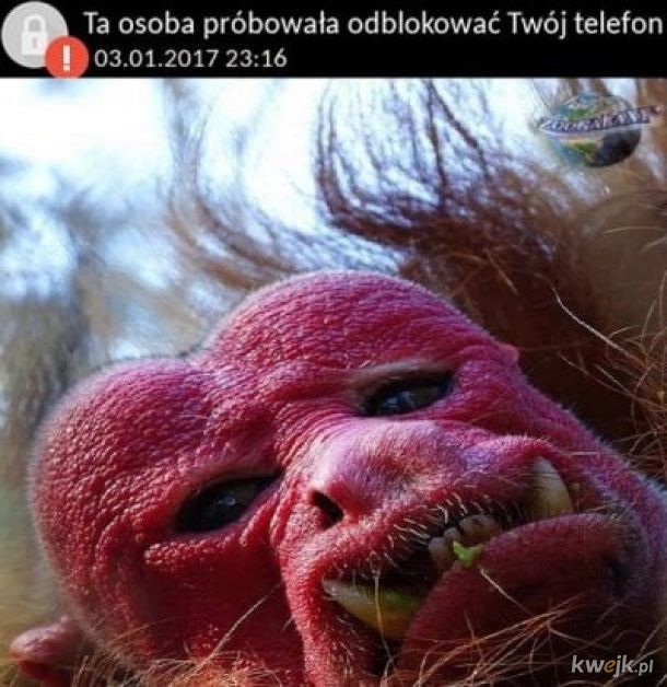 Kiedy zgubisz telefon we Wrocławiu