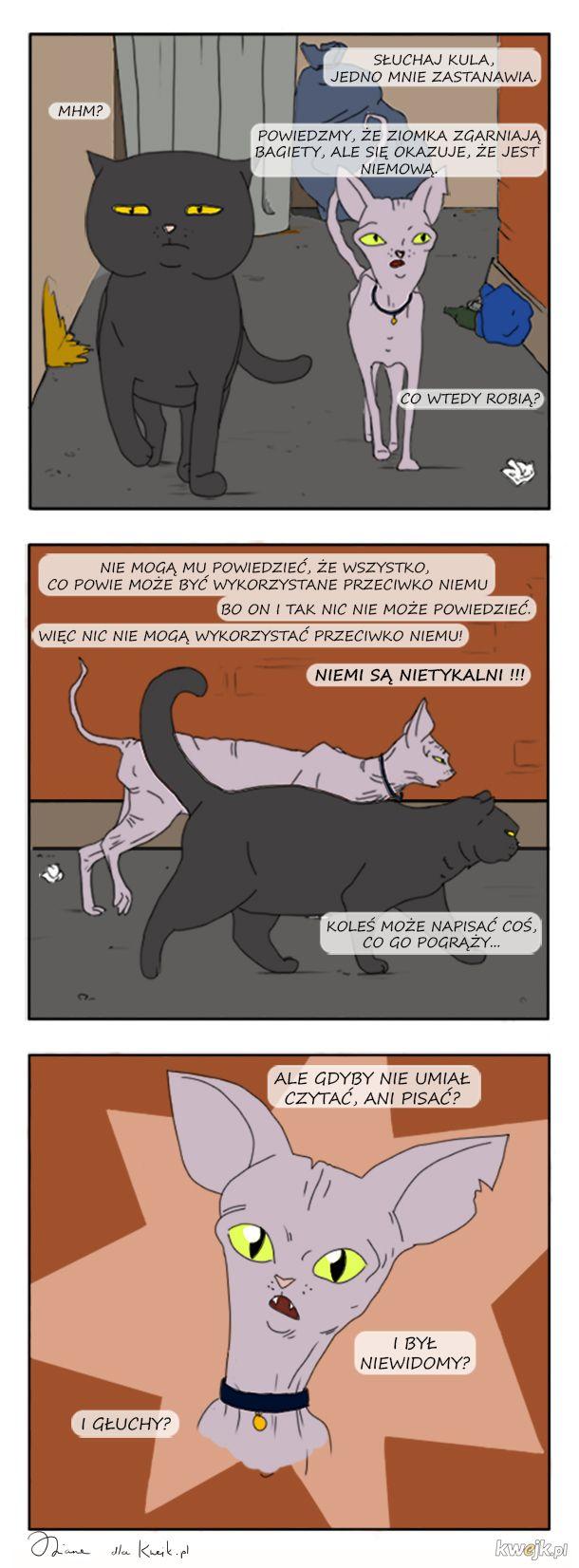 Komiks o kotach