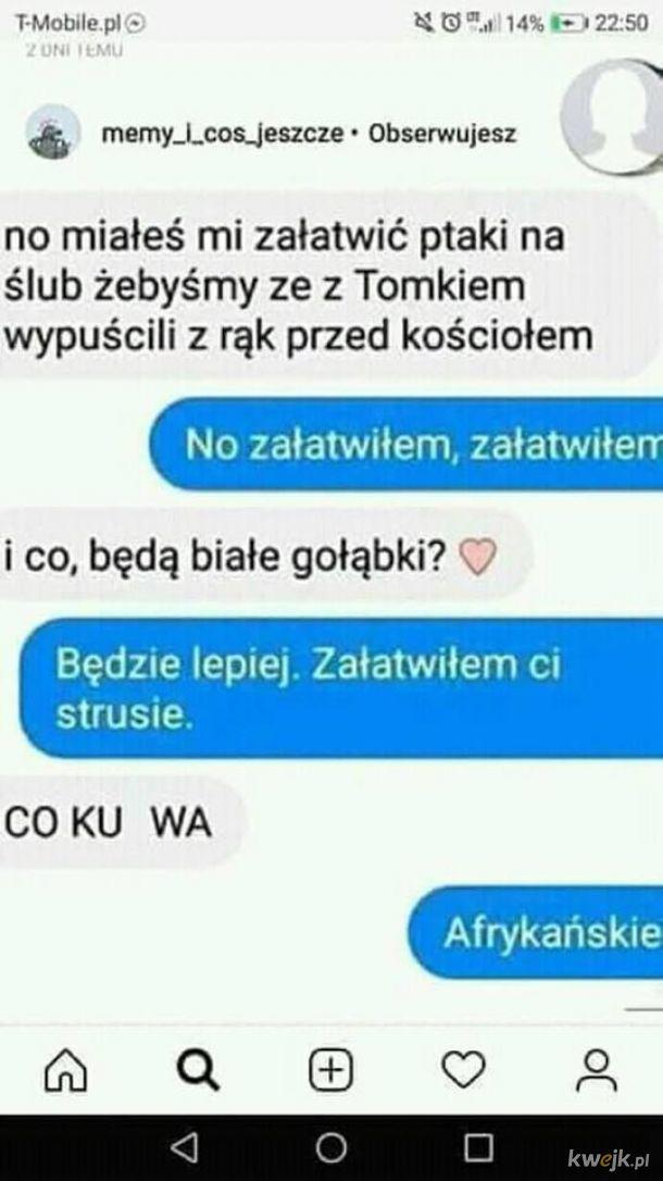 ecdbaeca7f4217 Też spoko w sumie xD - Ministerstwo śmiesznych obrazków - KWEJK.pl