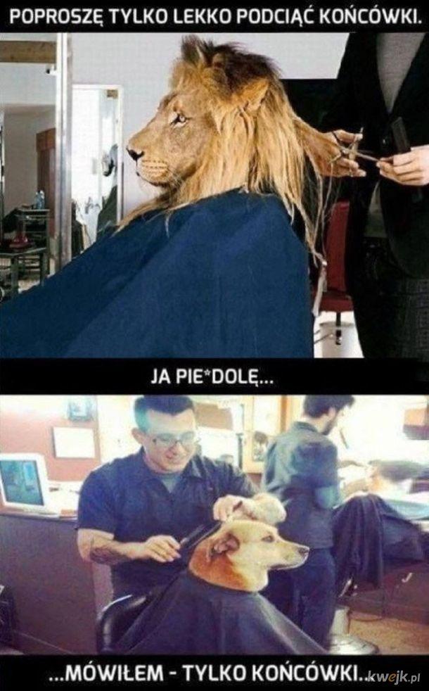 Za każdym razem u fryzjera