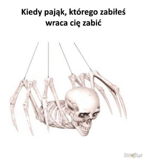 Niebezpieczny pająk