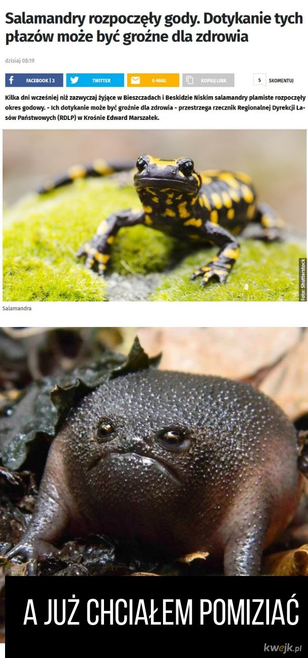 Nikt nie mizia żabki