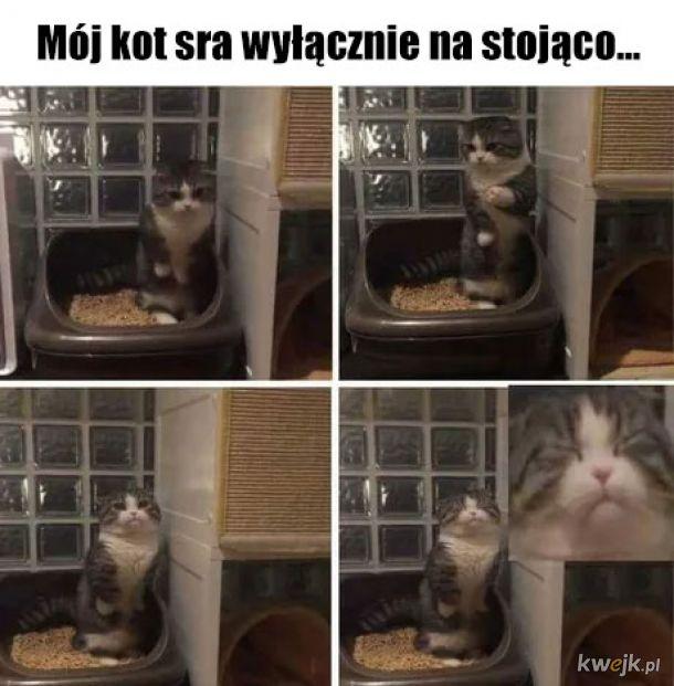Dziwny kotałke...