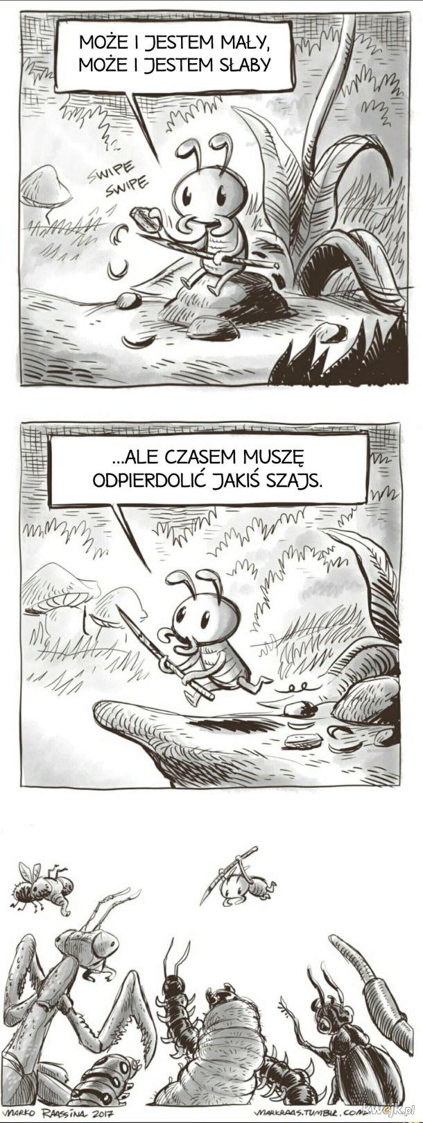 Mróweczka