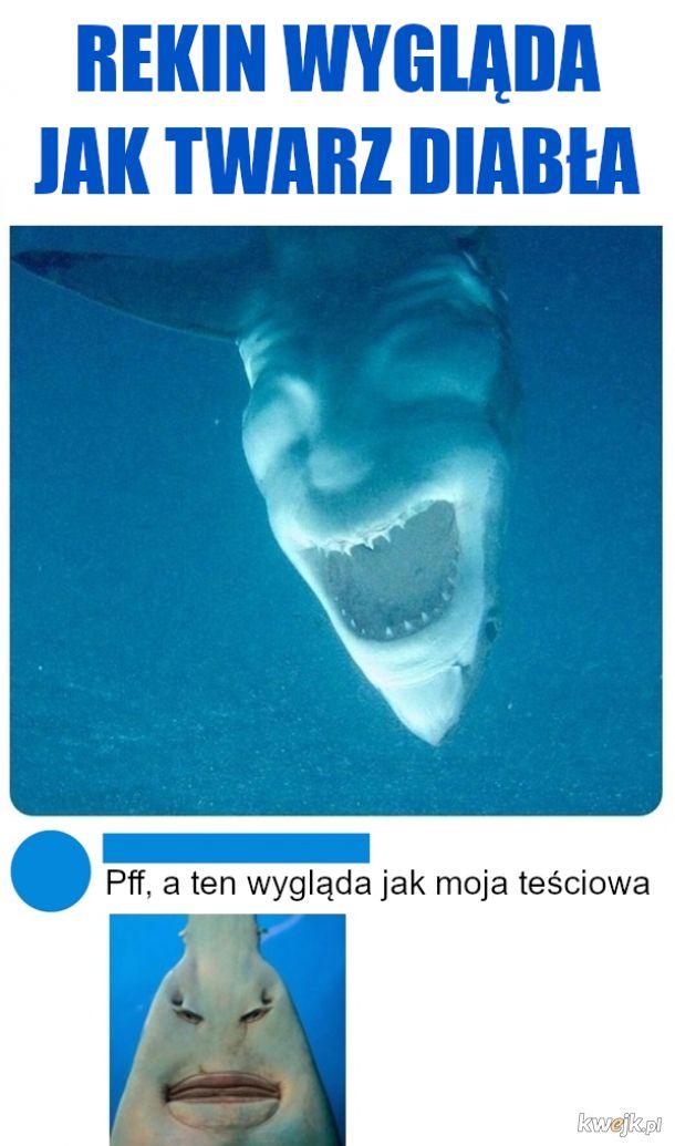 a jak wygląda twój rekin