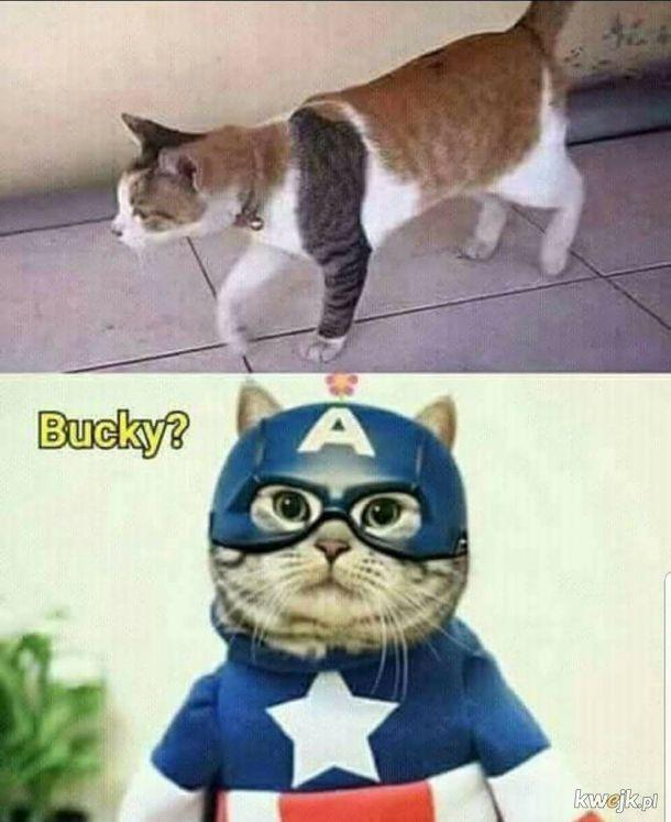 Bucky żyje!