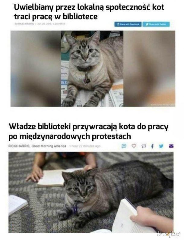 Kot w pracy