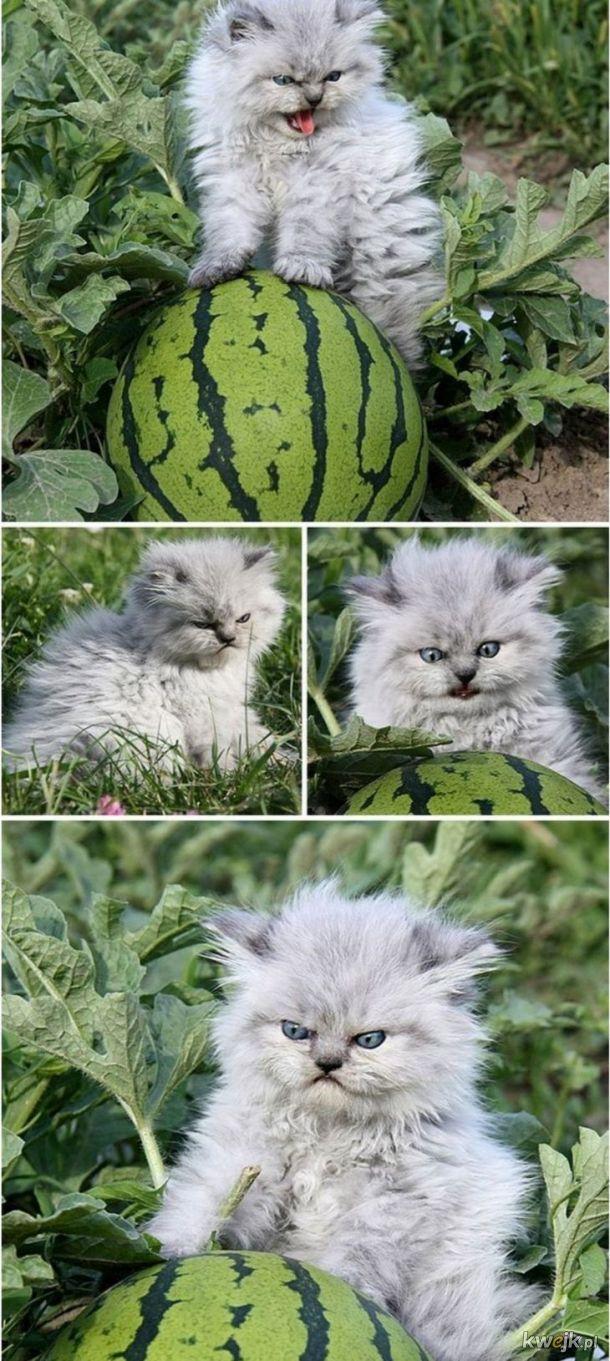 Najbardziej zafascynowany kot
