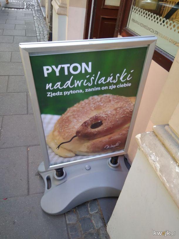 Pyton znad Wisły nadal żeruje w Warszawie