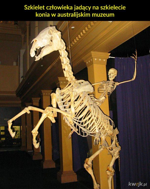 Dziwne i niecodzienne rzeczy znalezione w muzeach na całym świecie
