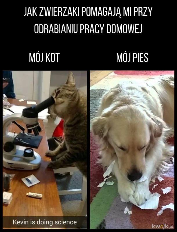 Koty są jednak bardziej pomocne