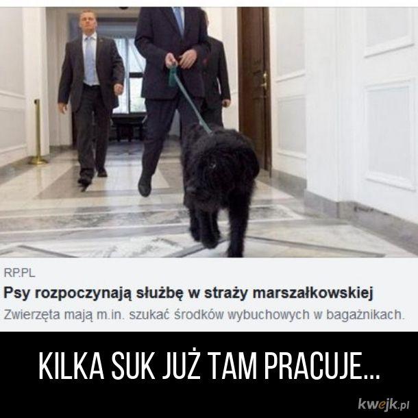 Psy i suki