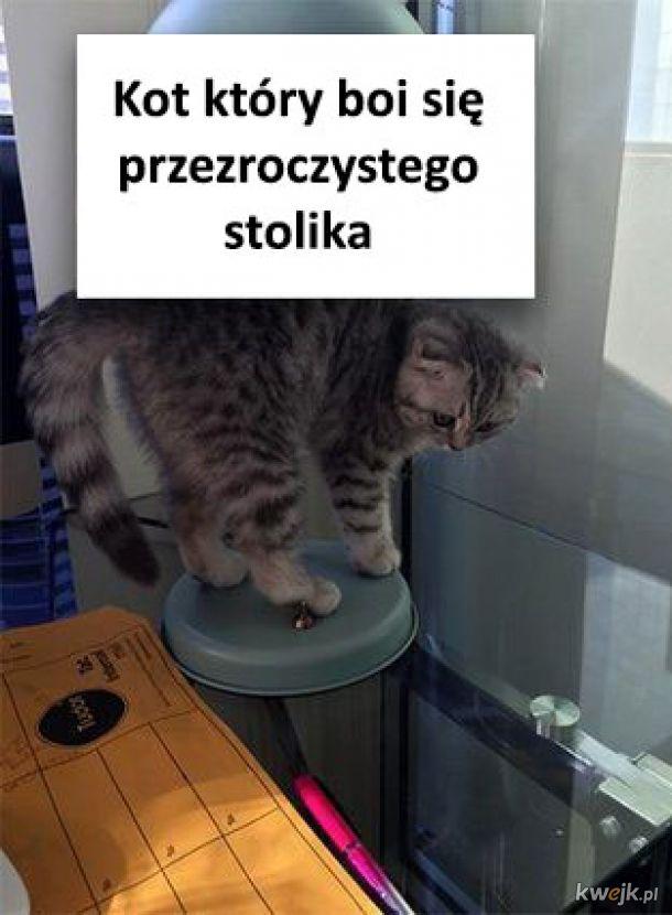 Bojaźliwy kot
