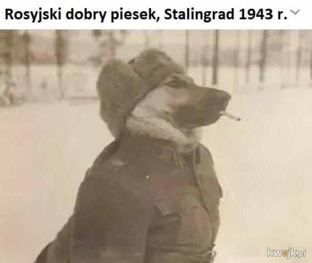 Grzeczny pies w ciężkich czasach