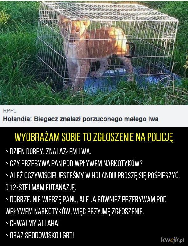 Holenderski lew