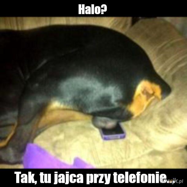 dodzwoniłęm sie?