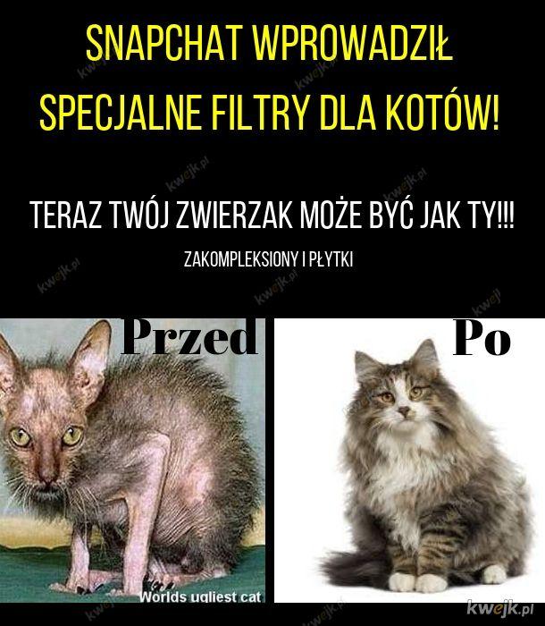 Filtr dla kotów