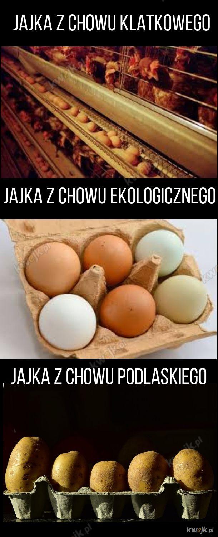 Rodzaje jajek
