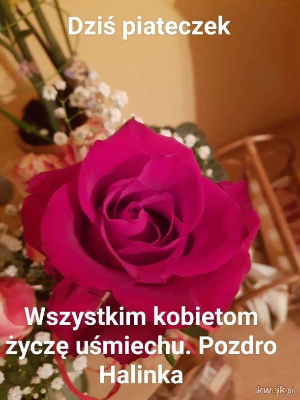 Dostałam różę od chłopaka. No i coż... Nie mogłam się powstrzymać.