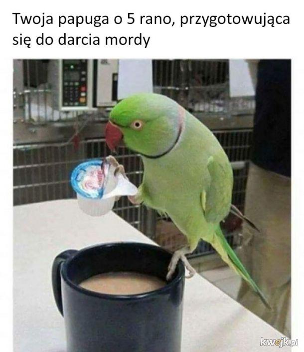 Jeszcze tylko kawusia i można zaczynać