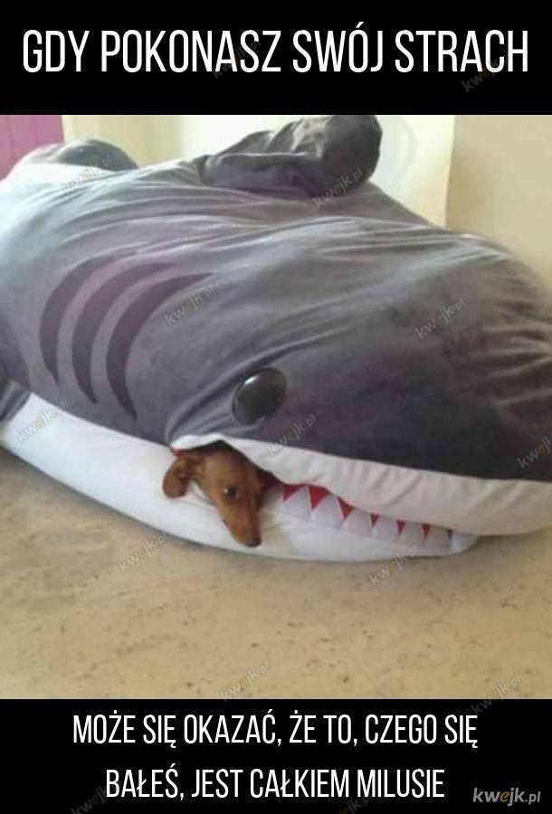 Straszny atak rekina na szczeniaczka