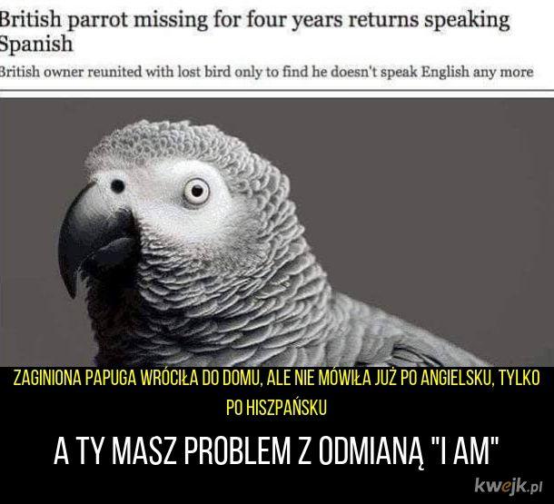 Papuga poliglota