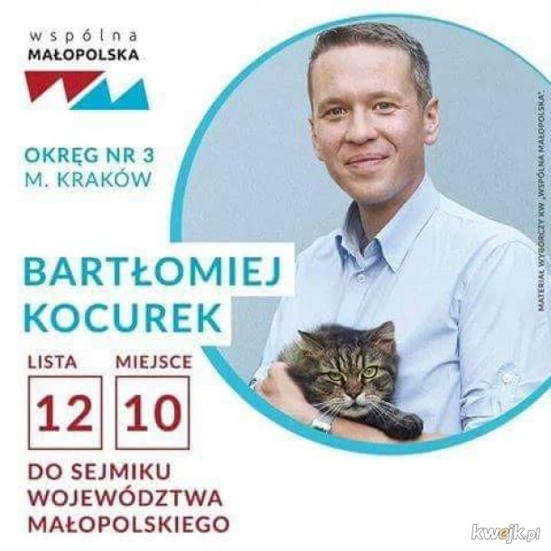 głosuję na kota