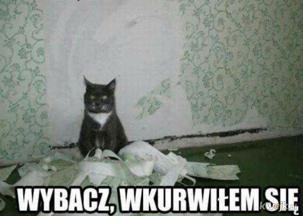 Kot nie szatan