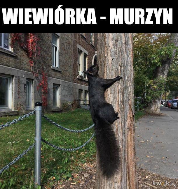 nigga squirlell