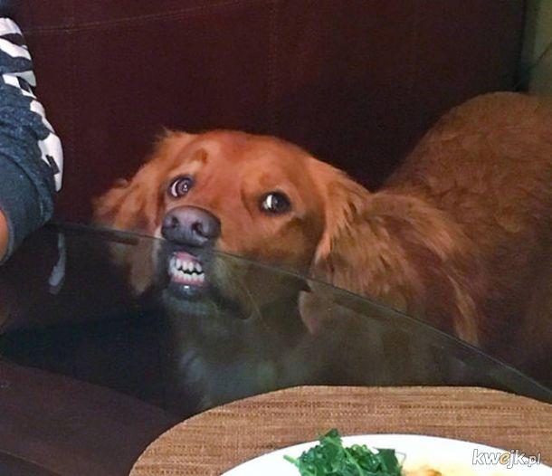 Pieski, które totalnie i absolutnie nie chcą twojego jedzenia