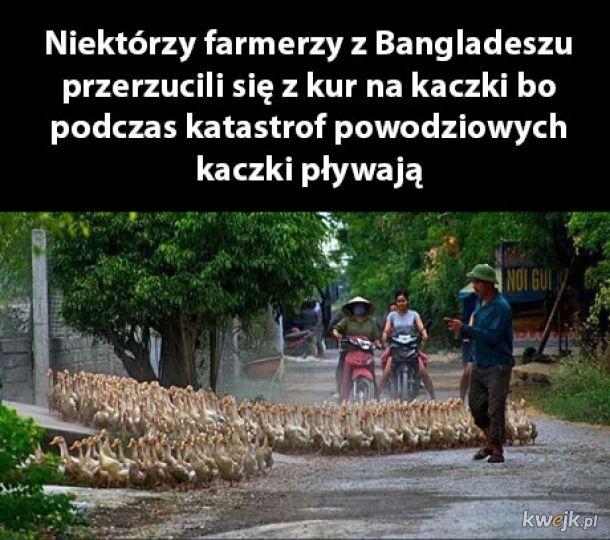Farmerzy z Bangladeszu