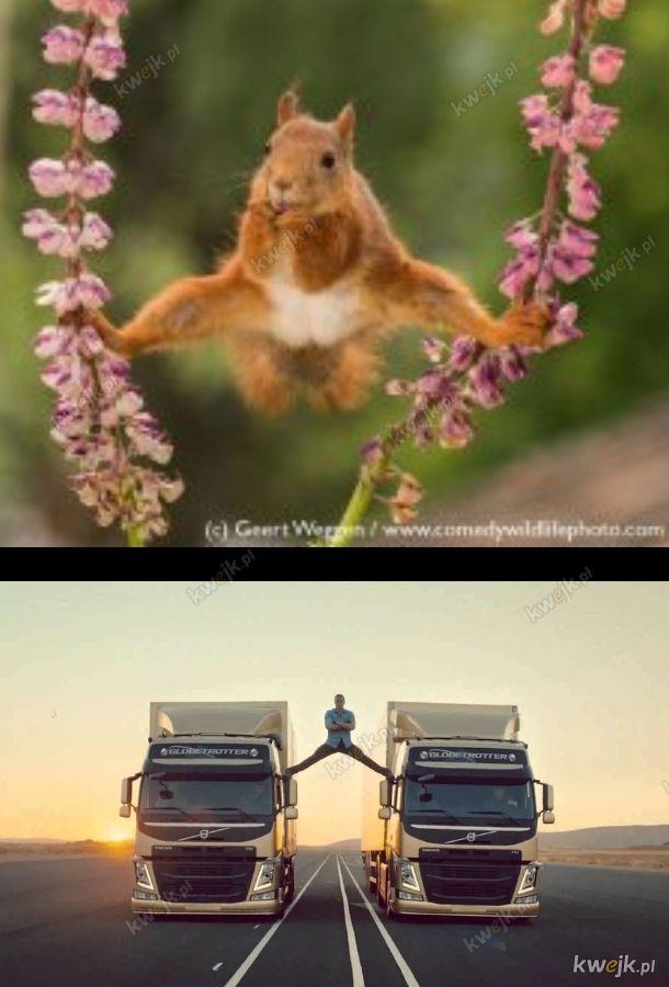 Ja van damme wiewiórkę!