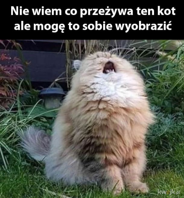 Cierpienie młodego kota