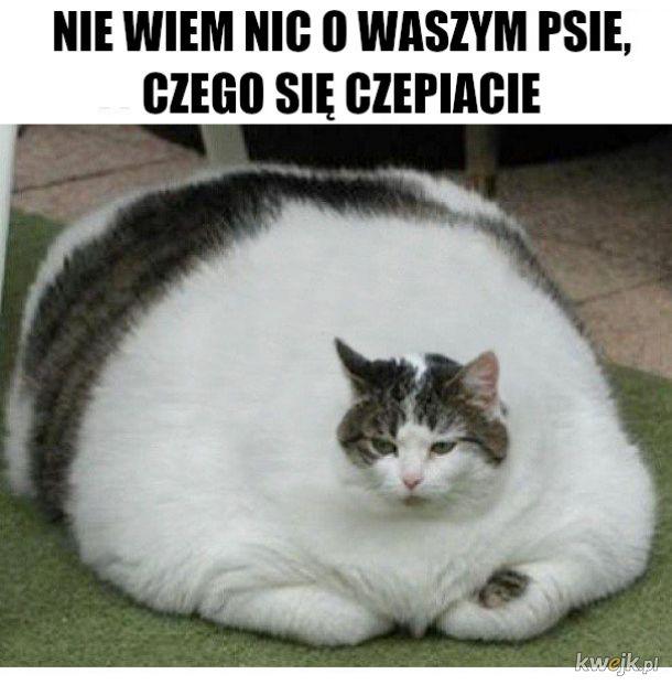 czo ten koteł