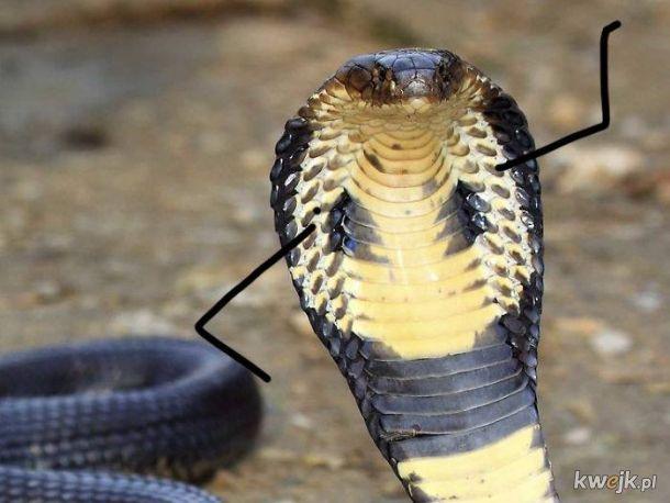 Gdyby węże miały ręce