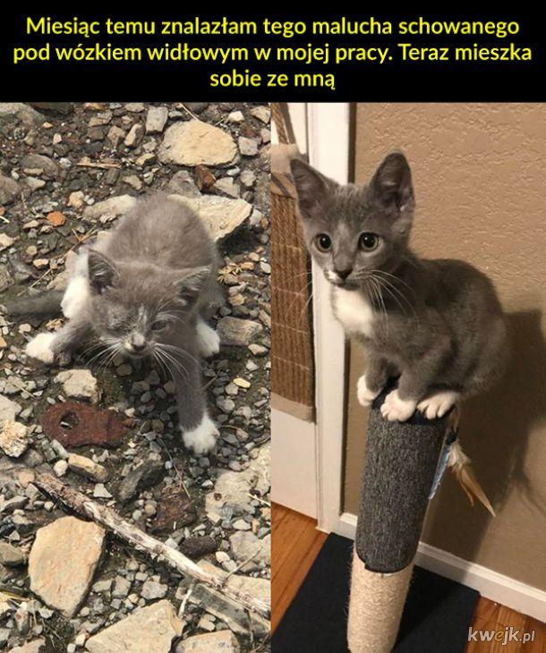 Przed adopcją i po