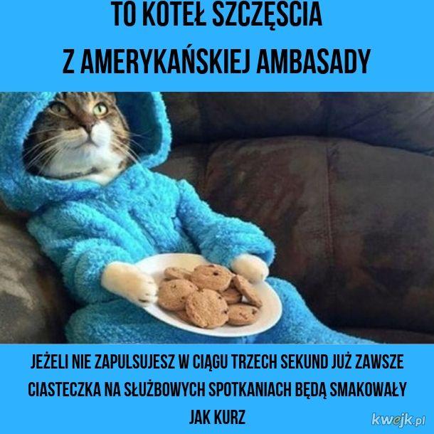 Koteł szczęścia z ambasady