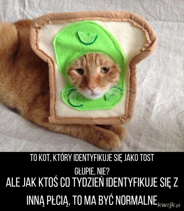 Kot, który jest tostem
