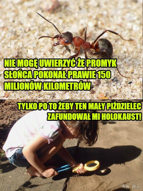mrówcze sprawy
