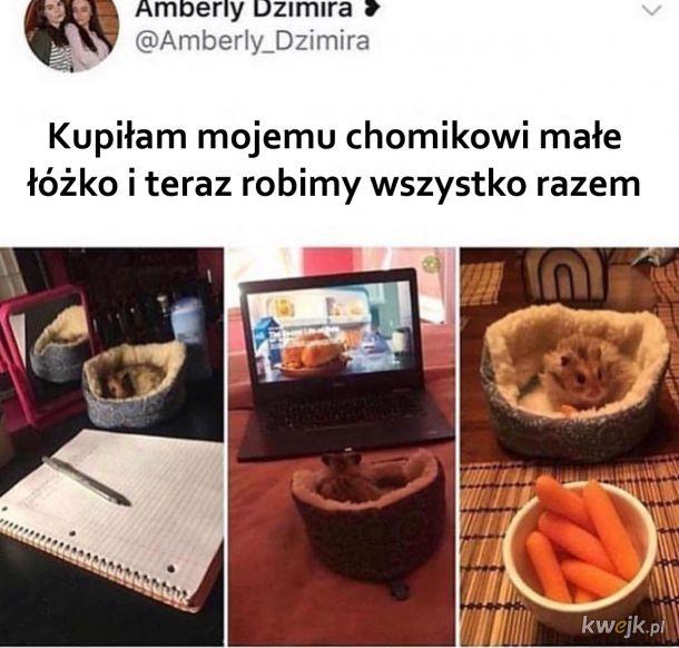 Chomiczek