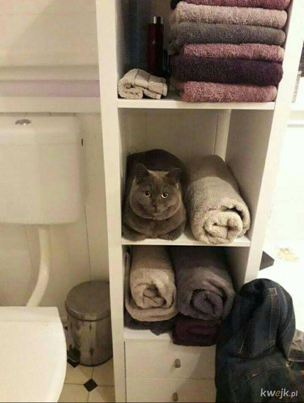 Jestem ręcznikiem