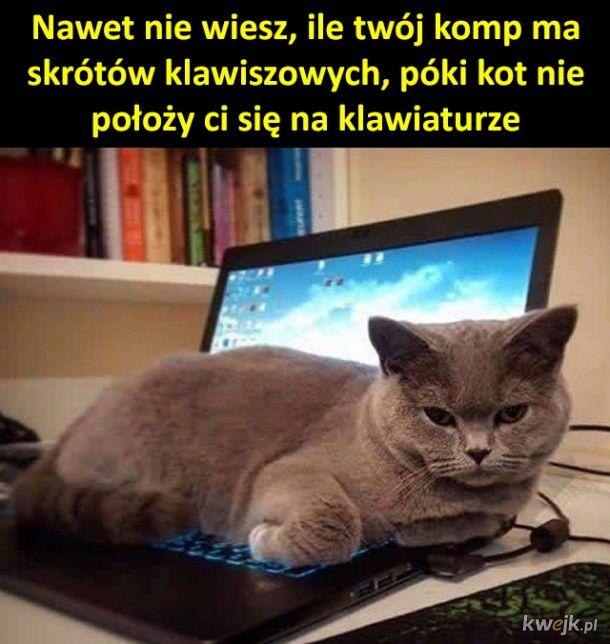 Koteł odkrywca