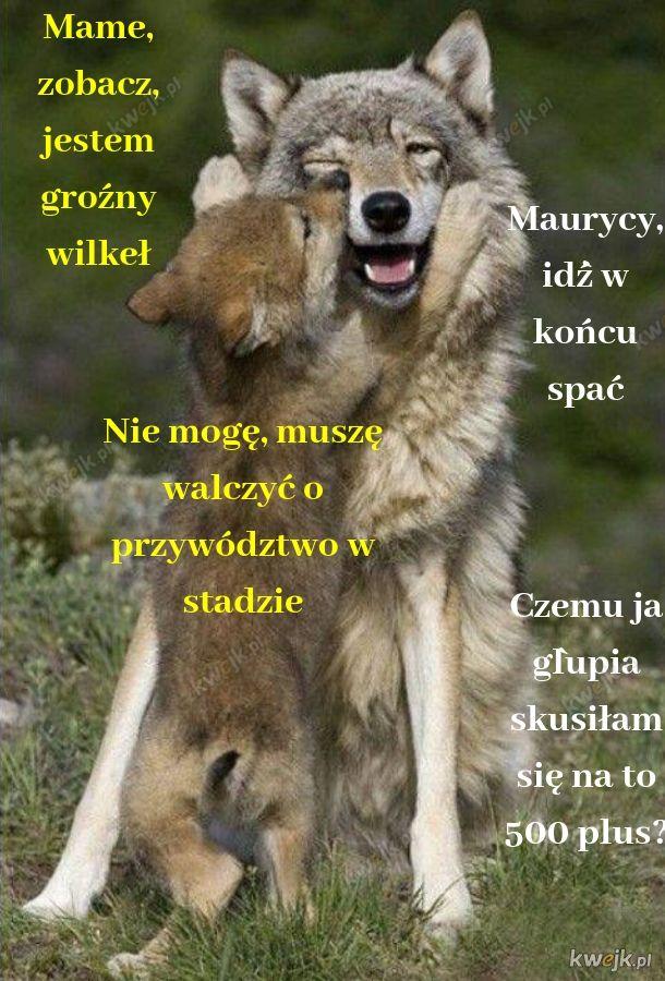Dziki i groźny wilkeł