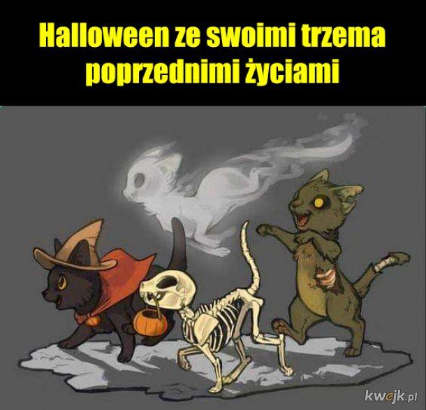 Tak koty obchodzą Halloween