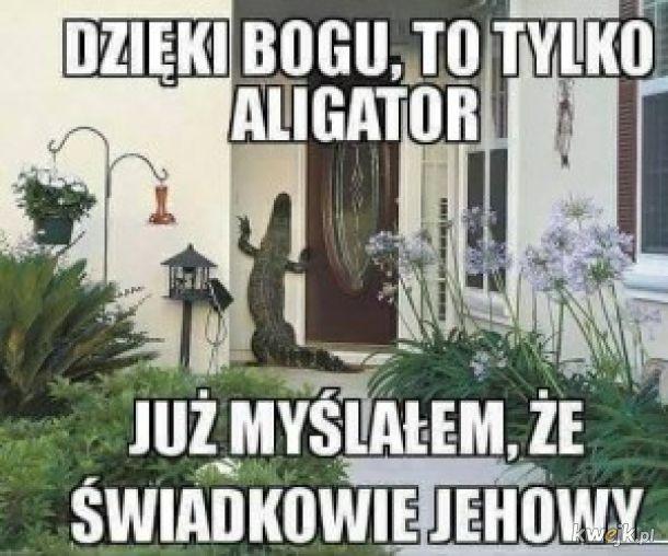 Znalezione obrazy dla zapytania: Świadkowa Jehowy memy