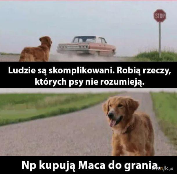 Ludzie vs psy